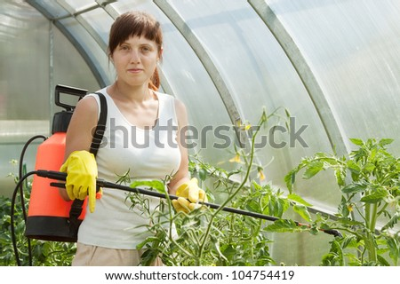 Woman spraying tomato plant in greenhouse