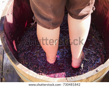 Woman stomping grapes in the wooden barrel at a grape stomping festival; Missouri, USA