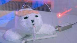 Woman strokes cute japan robot seal at technology exhibition. Robotic future concept