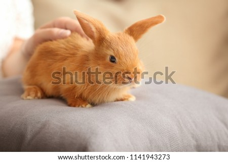 Woman stroking cute fluffy bunny at home #1141943273