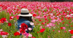 Woman take photo on poppy flower garden