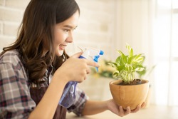 Woman takes care of potted plant at home, female cleans wipes leaves of monstera, and sprinkles with water. Hobbies, home gardening, Young Asian woman learning online about take care small tree .