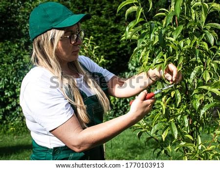 Woman taking care of peach tree. Zdjęcia stock ©