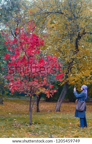Woman taking pictures on mobile phone beautiful tree with red leaves in the Park in the fall.