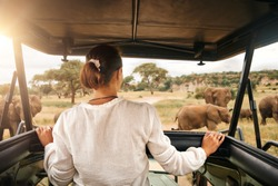 Woman tourist on a safari in Africa, traveling by car with an open roof in Kenya and Tanzania, watching elephants in the savannah. Tarangire National Park.
