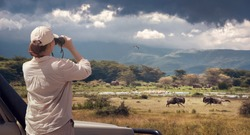 Woman tourist on safari in Africa, traveling by car in Kenya and Tanzania, watching birds, elephants and antelopes in wild savannah. Adventure and wildlife exploration in Africa. Manyara National Park