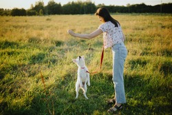 Woman training cute white puppy to behave and new tricks in summer meadow in warm sunset light. Adorable swiss shepherd fluffy puppy getting reward for learning.  Loyal friend. Teamwork