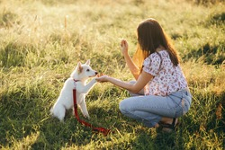 Woman training cute white puppy to behave and new tricks in summer meadow in warm sunset light. Adorable swiss shepherd puppy giving paw and getting reward for learning. Loyal friend. Teamwork