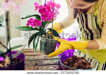 Woman transplanting orchid into another pot on kitchen. Housewife taking care of home plants and flowers