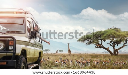 Woman traveller on safari in Africa, travels by car in Kenya and Tanzania, watches life wild tigers, giraffes, zebras and antelopes in the savannah. Adventure and wildlife exploration in Africa.