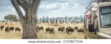 Woman traveller on safari in Africa, travels by car in Tanzania and Kenya, watches life wild tigers, giraffes and antelopes in the savannah. Adventure and wildlife exploration in Africa.