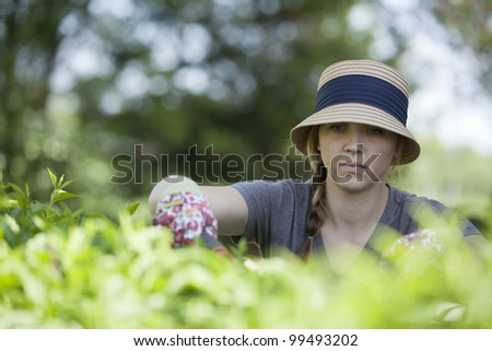Woman trimming the bushes in her backyard.