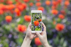 woman using smart phone to take a photo of beautiful flowers