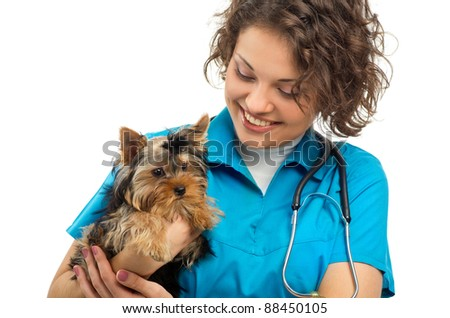 woman veterinarian holding a puppy - Yorkshire Terrier
