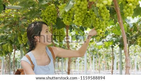 Woman visit green grape farm