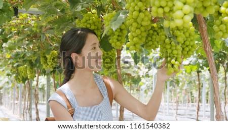 Woman visit green grape farm garden