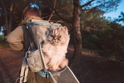 Woman walking in nature with her lovely cat in backpack carrier. Hiking with beautiful longhaired grey persian cat. High quality photo