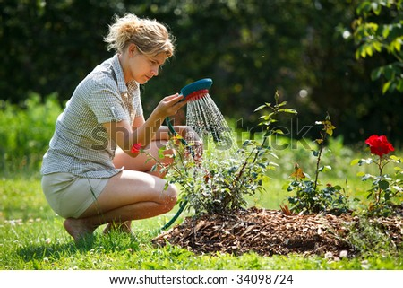 Woman watering rose plant with watering pot #34098724