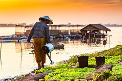 Woman watering vegetables on the banks of the Mekong River.
