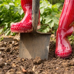 Woman wearing red rubber boots using shovel in her garden