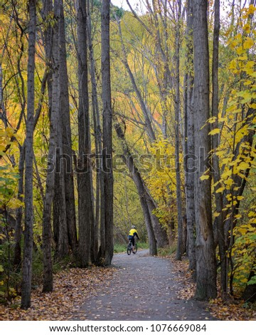 Woman Wearing Yellow Jacket Riding A Bicycle Amongst Yellow Autumn Trees in Arrowtown New Zealand #1076669084