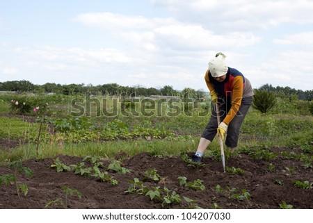 Woman weeding through a potato field