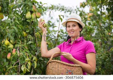 Woman with basket in a garden. Young smiling woman is standing with basket of organic apples in a orchard.