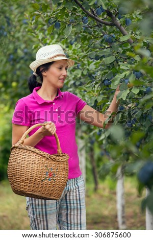 Woman with basket in a garden. Young smiling woman is standing with basket of organic plum in a orchard.