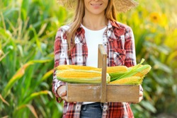 Woman with basket of fresh corn cobs in field