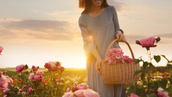 Woman with basket of roses in beautiful blooming field, closeup