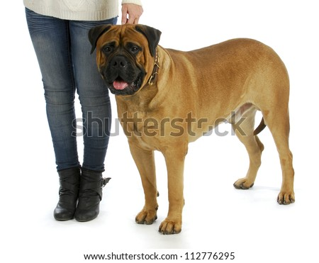woman with big dog - woman holding collar of bull mastiff isolated on white background #112776295