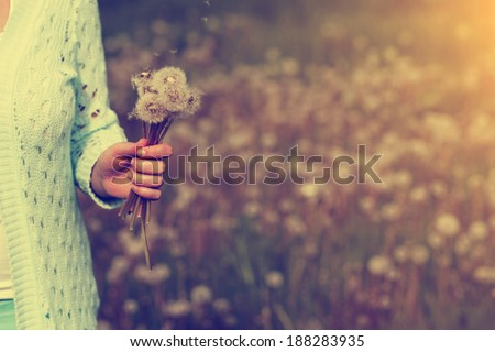 Woman with bunch of dandelion flowers in hand
