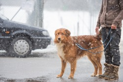 Woman with dog walk in winter on the road