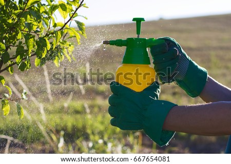 Woman with gloves spraying a leaves of fruit tree against plant diseases and pests. Use hand sprayer with pesticides in the garden. #667654081