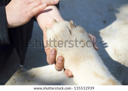 woman with her hand stroking her blond dog