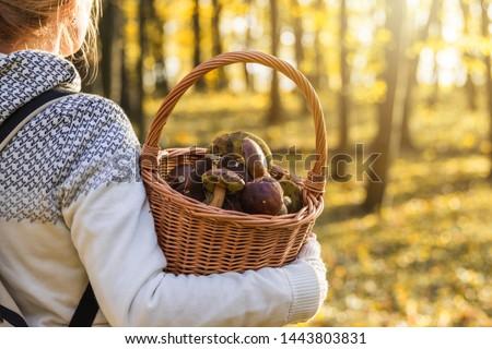 Woman with mushrooms in wicker basket in autumn forest. Harvesting edible mushroom in woodland. Fall season