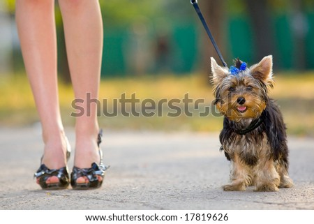 Woman with sweet tiny terrier