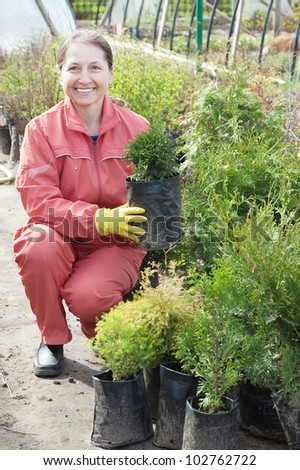 woman with thuja sprouts in pots  at plant