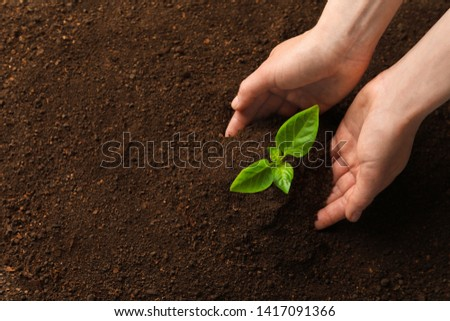 Woman with young seedling in soil, top view. Space for text #1417091366