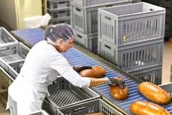 woman working in a large bakery - industrial production of bakery products on an assembly line