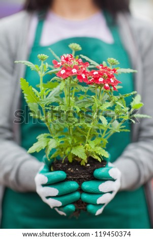 Woman working in garden center holding plant out of it pot