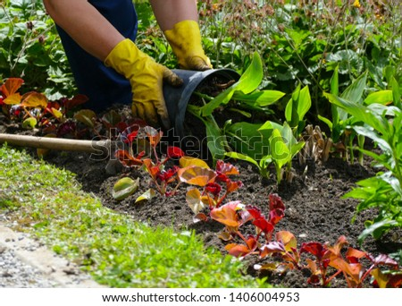 Woman working in the garden with green plants  and flowers  #1406004953