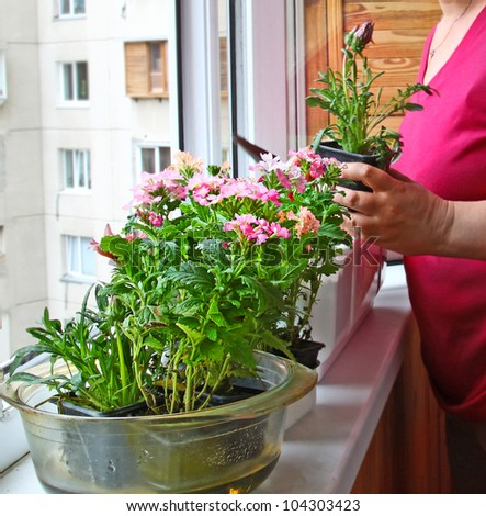 Womanish hands are replanted by flowers on a balcony