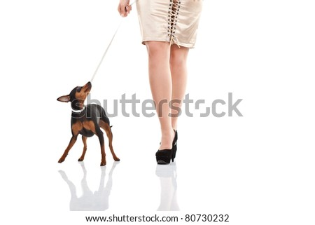 women and dog walking, woman's legs with high heels and miniature  pincher , isolated