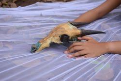 women's hands and animal skulls