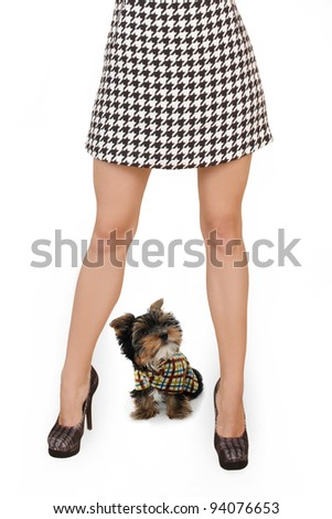Women's slender legs with a dog are isolated on a white background