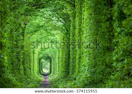 Wonder of Nature - Real Tunnel of Love, green trees and the railroad,  Ukraine.