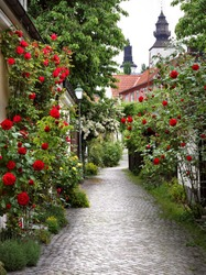 Wonderful alley of roses in the medieval town of visby.
