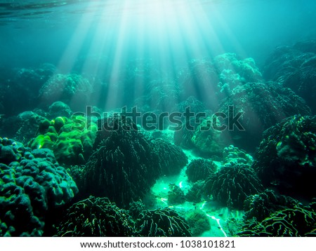Wonderful and beautiful underwater in deep  tropical sea and sun rays. Water texture in ocean with corals and tropical fish. #1038101821