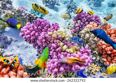 Wonderful and beautiful underwater world with corals and tropical fish. #262322792